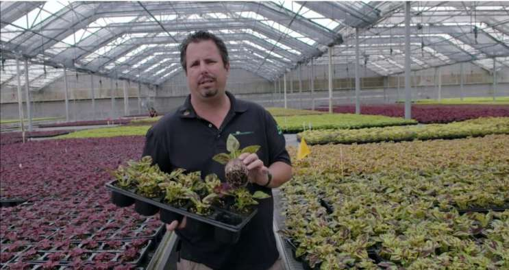 Bruce Knox Of Nursery In A Video Submitted To The State As Part His Medical Lication