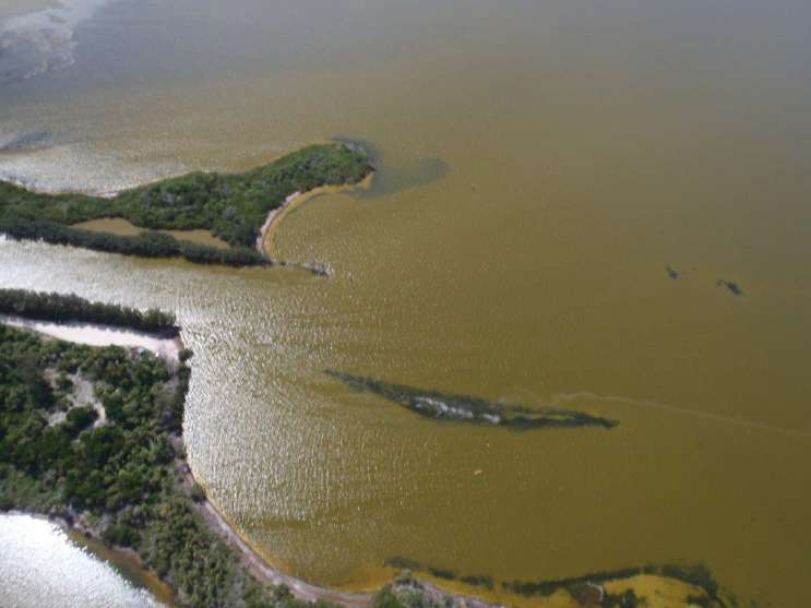 Previous tide bloom in the Indian River Lagoon region. Photo by St. Johns River Water Management staff.